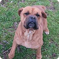 Adopt A Pet :: Murdoch - Sunderland, MA