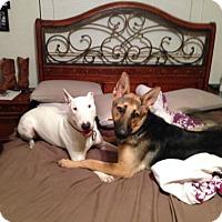 Adopt A Pet :: Caine - Houston, TX