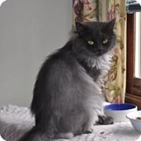 Adopt A Pet :: Chloe - St. Charles, IL