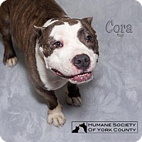 Adopt A Pet :: Cora - Fort Mill, SC