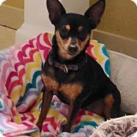 Adopt A Pet :: Roxi - Gainesville, FL
