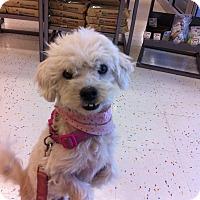 Adopt A Pet :: Bella - Tampa, FL