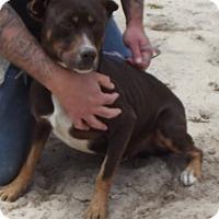 Adopt A Pet :: Buddy - Cheboygan, MI