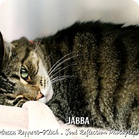 Adopt A Pet :: Jabba - Appleton, WI