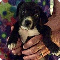 Adopt A Pet :: Eric - Buffalo, NY