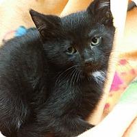 Adopt A Pet :: Lemon - Berlin, CT