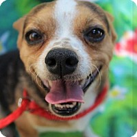 Adopt A Pet :: Chato - Red Bluff, CA