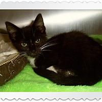 Adopt A Pet :: LANA - Medford, WI