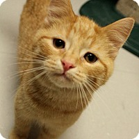 Adopt A Pet :: Dopey - Tiffin, OH