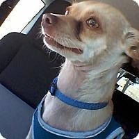 Adopt A Pet :: Eugene - Culver City, CA