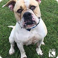 Adopt A Pet :: Bella - Tomball, TX