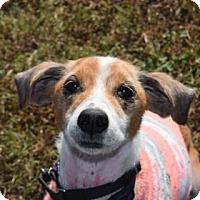 Adopt A Pet :: KIWI - Gloucester, VA