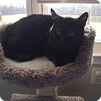Adopt A Pet :: Opal - Newtown, PA