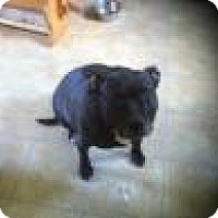 Adopt A Pet :: Nina - Elyria, OH