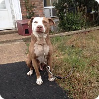 Adopt A Pet :: Bernadette - Bartlett, TN