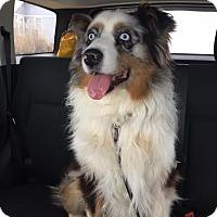 Adopt A Pet :: Finnley - Muskegon, MI
