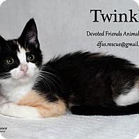 Adopt A Pet :: Twinkle - Ortonville, MI