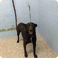 Adopt A Pet :: URGENT on 12/23 SAN BERNARDINO - San Bernardino, CA