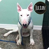 Adopt A Pet :: Julian - Lake Worth, FL