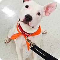 Adopt A Pet :: Ghost - Fredericksburg, VA