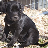 Adopt A Pet :: Haley - Bedford, IN