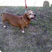 Adopt A Pet :: Gunner - Scottsdale, AZ