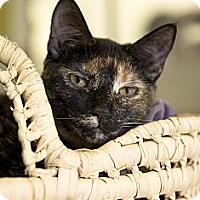 Adopt A Pet :: Beth - El Cajon, CA