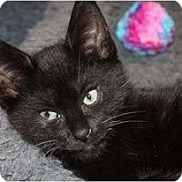 Adopt A Pet :: Osi (le) - Little Falls, NJ