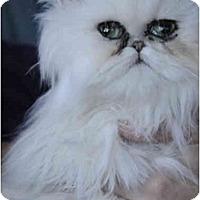 Adopt A Pet :: Kelsey - Columbus, OH