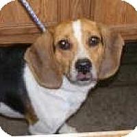 Adopt A Pet :: Alpine - Novi, MI