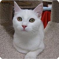 Adopt A Pet :: Popcorn - Brea, CA