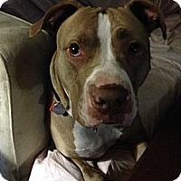Adopt A Pet :: Joshua - Elderton, PA