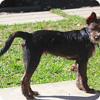 Adopt A Pet :: Tommy-MEET HIM - Norwalk, CT