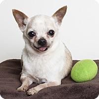 Adopt A Pet :: Oscar - Oakland, CA