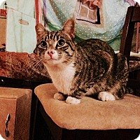 Adopt A Pet :: Ty - Pasadena, CA