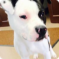 Adopt A Pet :: Pepper - South Windsor, CT
