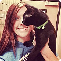 Adopt A Pet :: Sookie Smokey black - McDonough, GA
