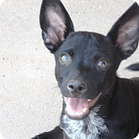 Adopt A Pet :: Kirby - Las Cruces, NM