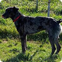 Adopt A Pet :: Joserph - Prole, IA