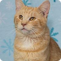 Adopt A Pet :: Taffy - Elmwood Park, NJ