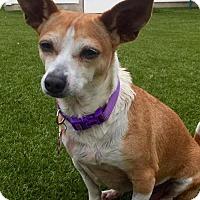 Adopt A Pet :: Wendy (Cali 15) - Whitestone, NY