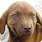 Adopt A Pet :: Ned