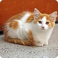 Adopt A Pet :: Garfield - SAN PEDRO, CA