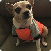 Adopt A Pet :: Ricky - Las Vegas, NV