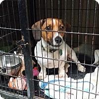 Adopt A Pet :: ROSCOE - Lubbock, TX