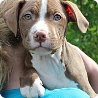 Adopt A Pet :: Adrian - Mayer, MN