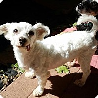 Adopt A Pet :: Wiley - Columbia, MD