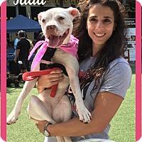 Adopt A Pet :: Jada (MD) - New York, NY