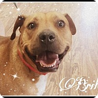 Adopt A Pet :: Briles - Kingwood, TX