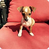 Adopt A Pet :: Faline - Brea, CA